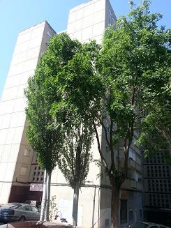 Apartamento en Guadalajara (20531-0001) - foto0