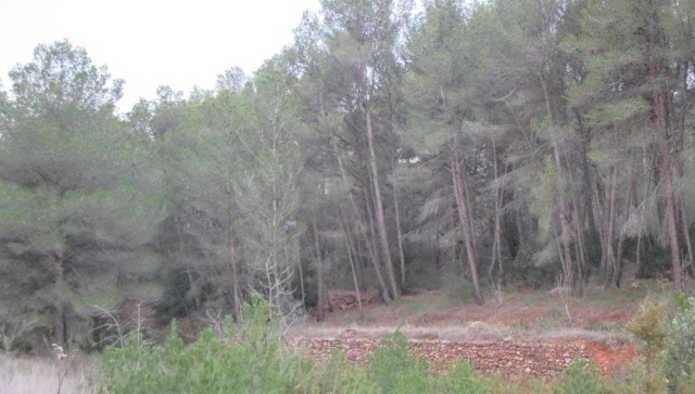 Casa en Algimia de Alfara (38887-0001) - foto2
