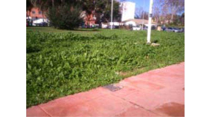 Solares en Huelva (38381-0001) - foto3