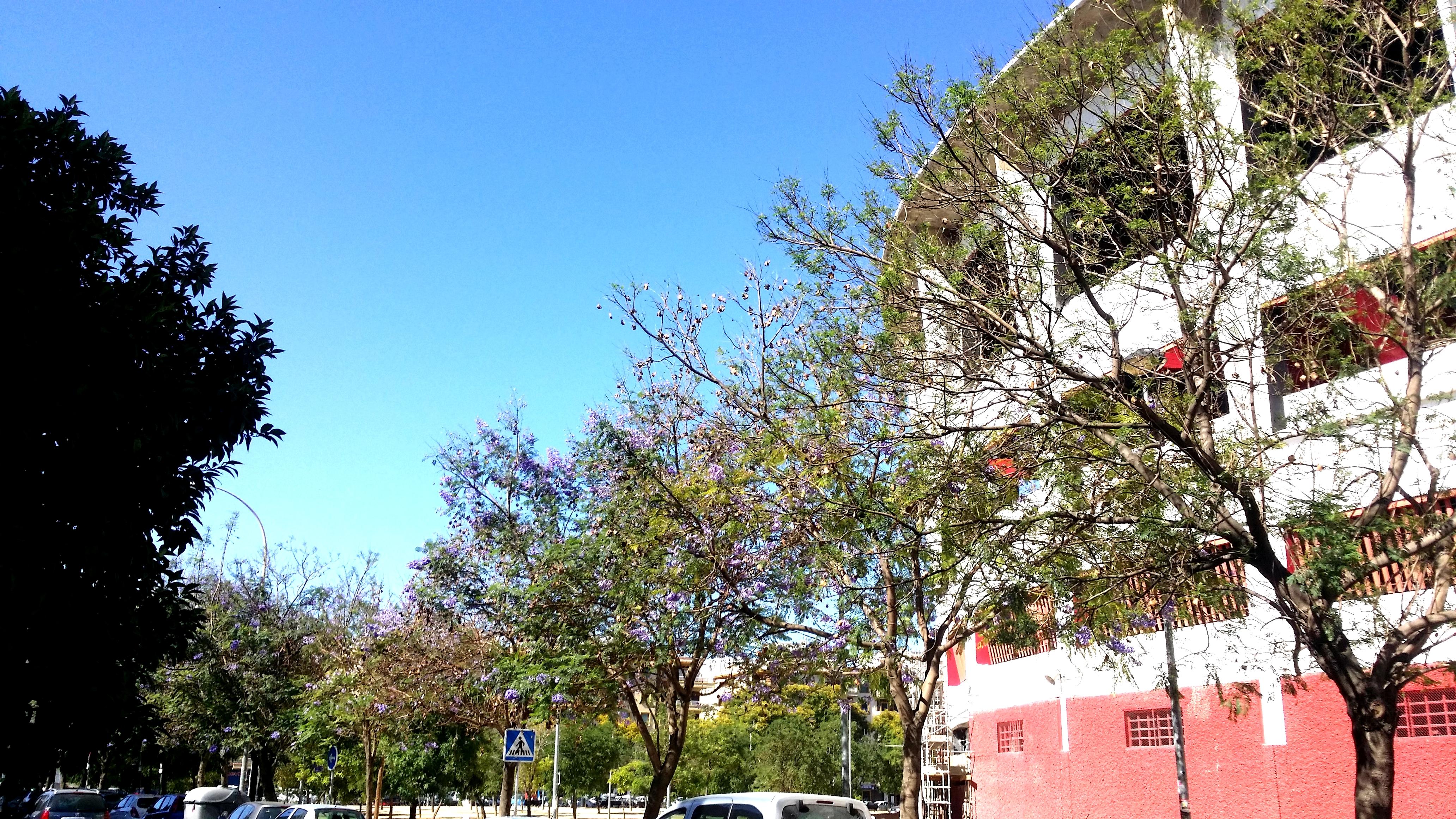Piso en Sevilla (Vivienda Nervión) - foto1